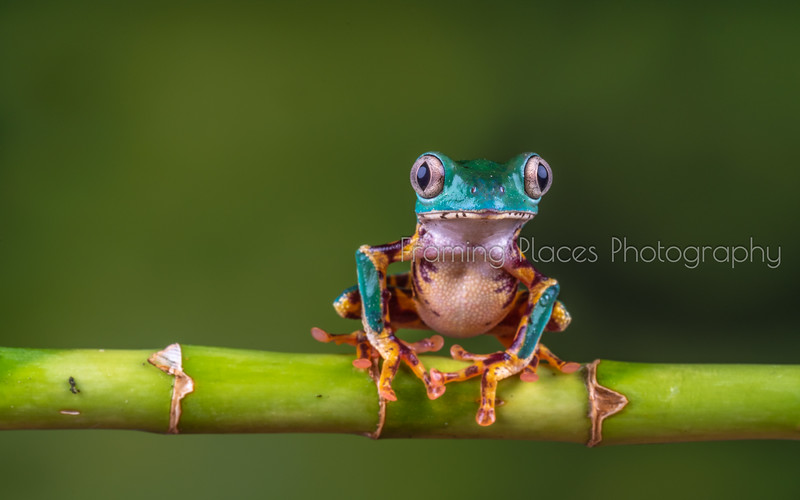 Frog Alert