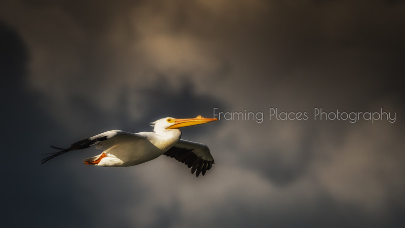 Pelican Sunset Flight