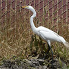 Got it!  A lizard.