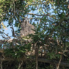 It was about 7:00 AM and both parents were out hunting.