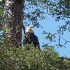 The female watching her chick finish off the fish.