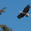 Second pass