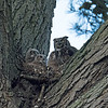 Sadly, the nest is located high in a tree with a poor background for evening photography.