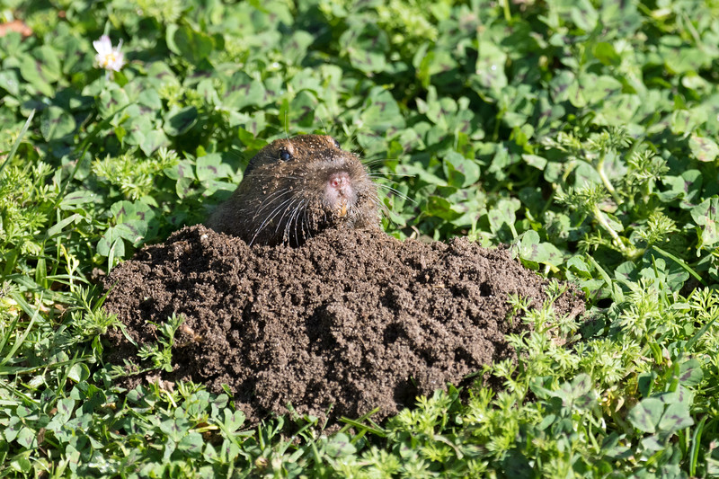 Gopher - my personal favorite ground animal in the park.