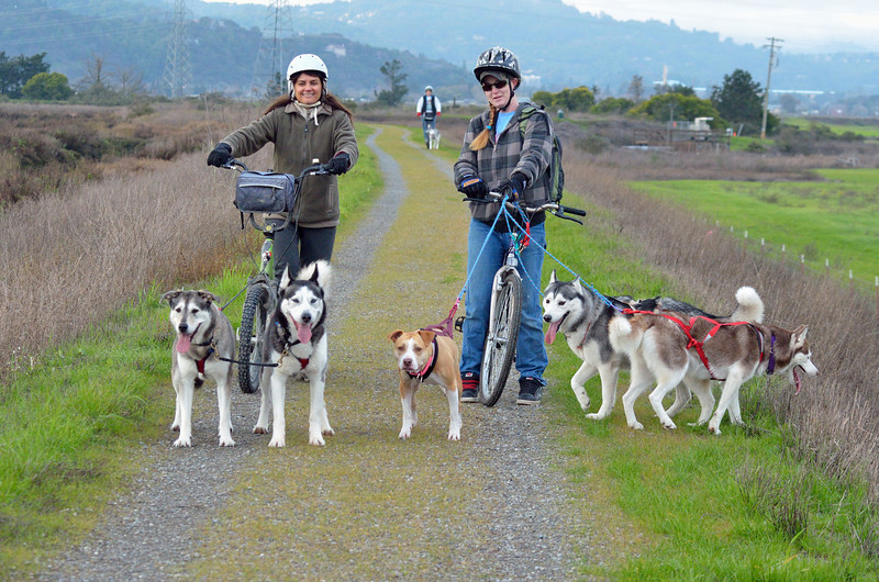 """We were walking way out past the last pond when we heard something approaching (fast) from behind.  We turned around and thought we were hallucinating.  Sled dogs in San Rafael????  There were about 5 small teams of dogs being """"mushed"""".  Even though these women have bikes, they were actually being dragged by the dogs.  The other dog teams were dragging sleds behind them."""