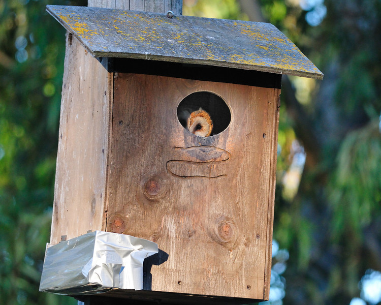 """Taken around 6:45 AM on May 23 in the parking lot box near the """"woodpecker tree""""."""