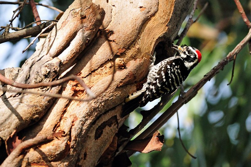 Ditto for the woodpeckers, although both parents were trying very hard to coax the baby out of the nest.