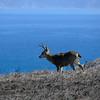 Same male deer