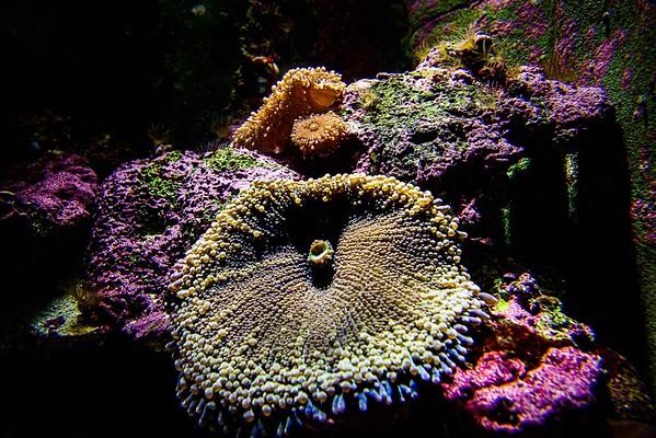 Sydney Sydney Aquarium