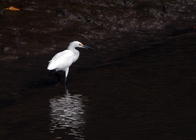 One Legged Egret