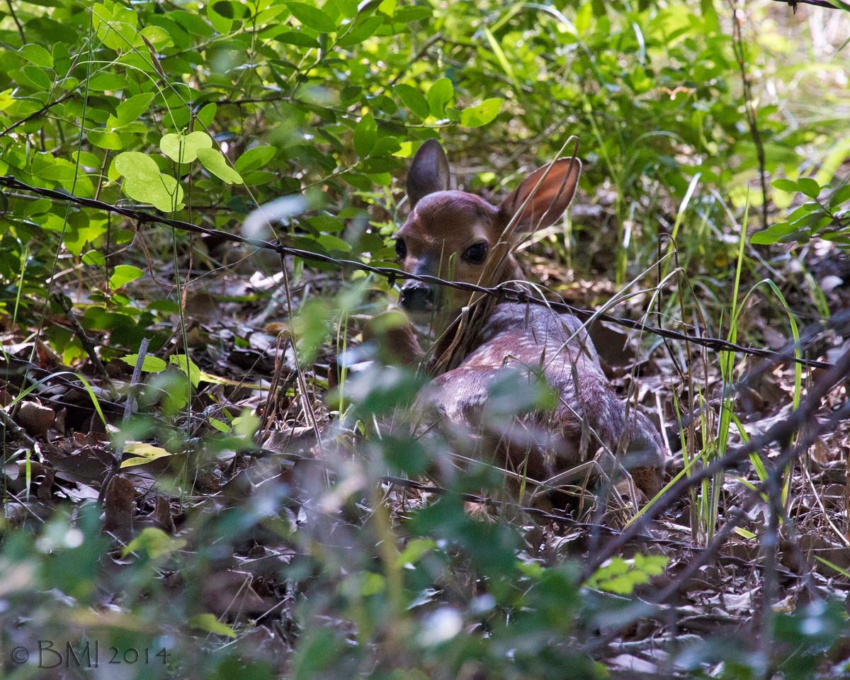 IMAGE: https://photos.smugmug.com/Nature-and-wildlife/Wildlife-and-nature/i-ChFDrLg/2/f484f6c2/X2/14125350439-X2.jpg