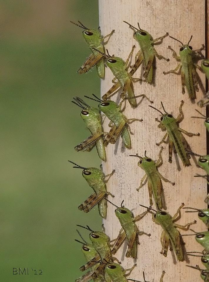 IMAGE: https://photos.smugmug.com/Nature-and-wildlife/Wildlife-and-nature/i-S2QHR5s/2/aaedec31/X2/7969902362-X2.jpg