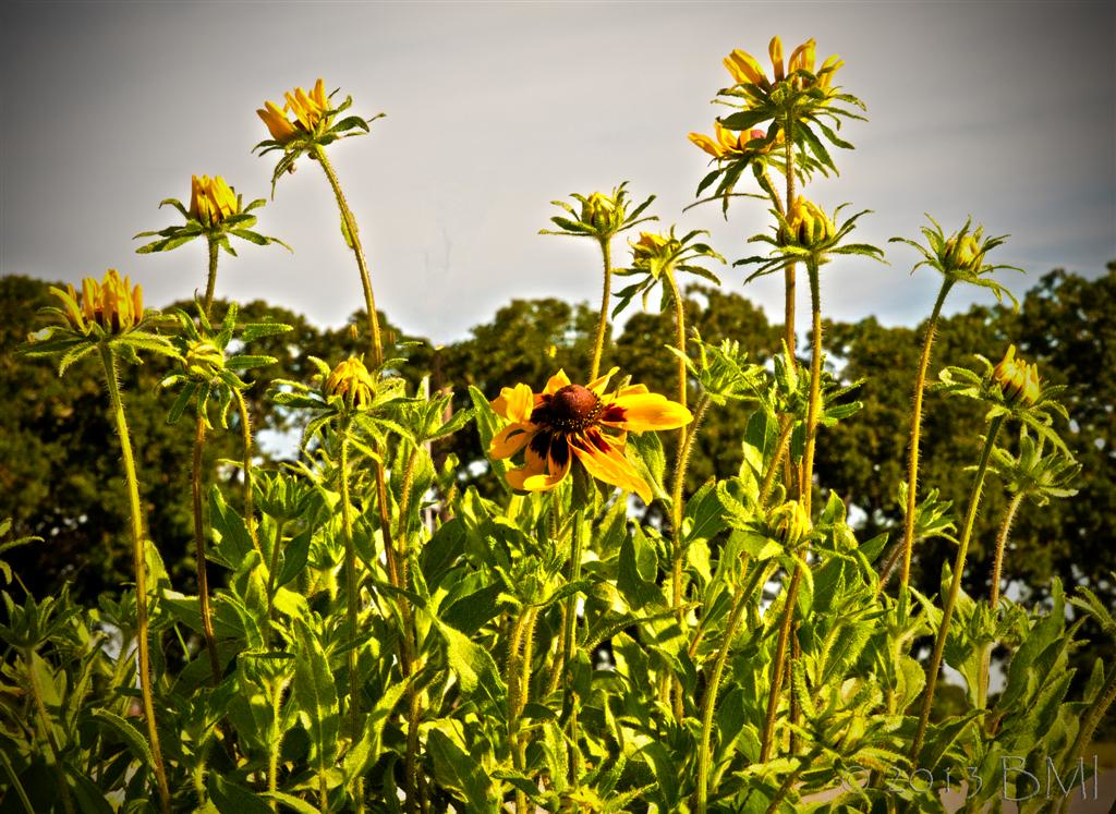 IMAGE: https://photos.smugmug.com/Nature-and-wildlife/Wildlife-and-nature/i-h6Lv3sP/2/392840ab/XL/8716022638-XL.jpg