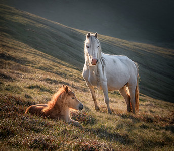 Mare and Foal, Brecon Beacons