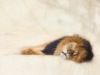 """Softly Sleeping"""