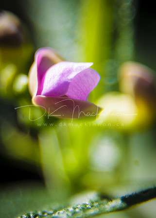 Garden Macro #36