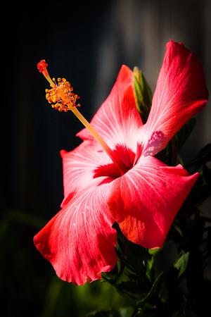 Garden Macro #20