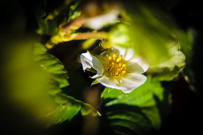 Garden Macro #7