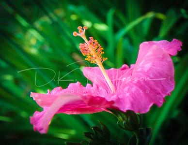 Garden Macro #1