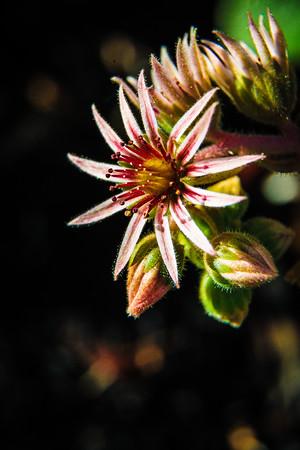 Garden Macro #16