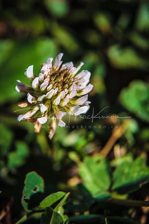 Garden Macro #45