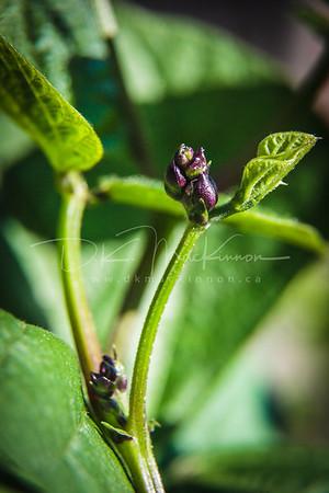 Garden Macro #29