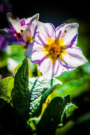 Garden Macro #23