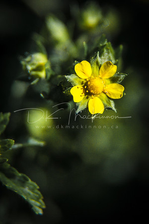 Garden Macro #26