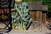 Borges Ranch - Cactus - early morning