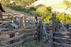 Borges Ranch - cattle pens - The Dove