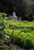 HALF MOON BAY, PLANT NURSERY