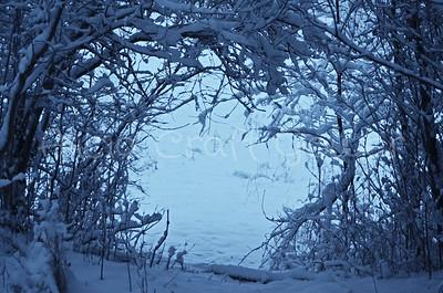 Narnia Look-alike