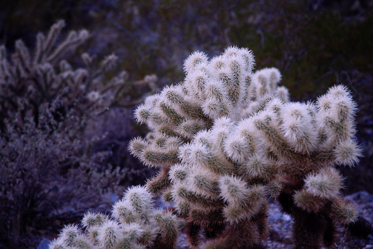 Christmas Cactus - Squaw Peak, December 2006