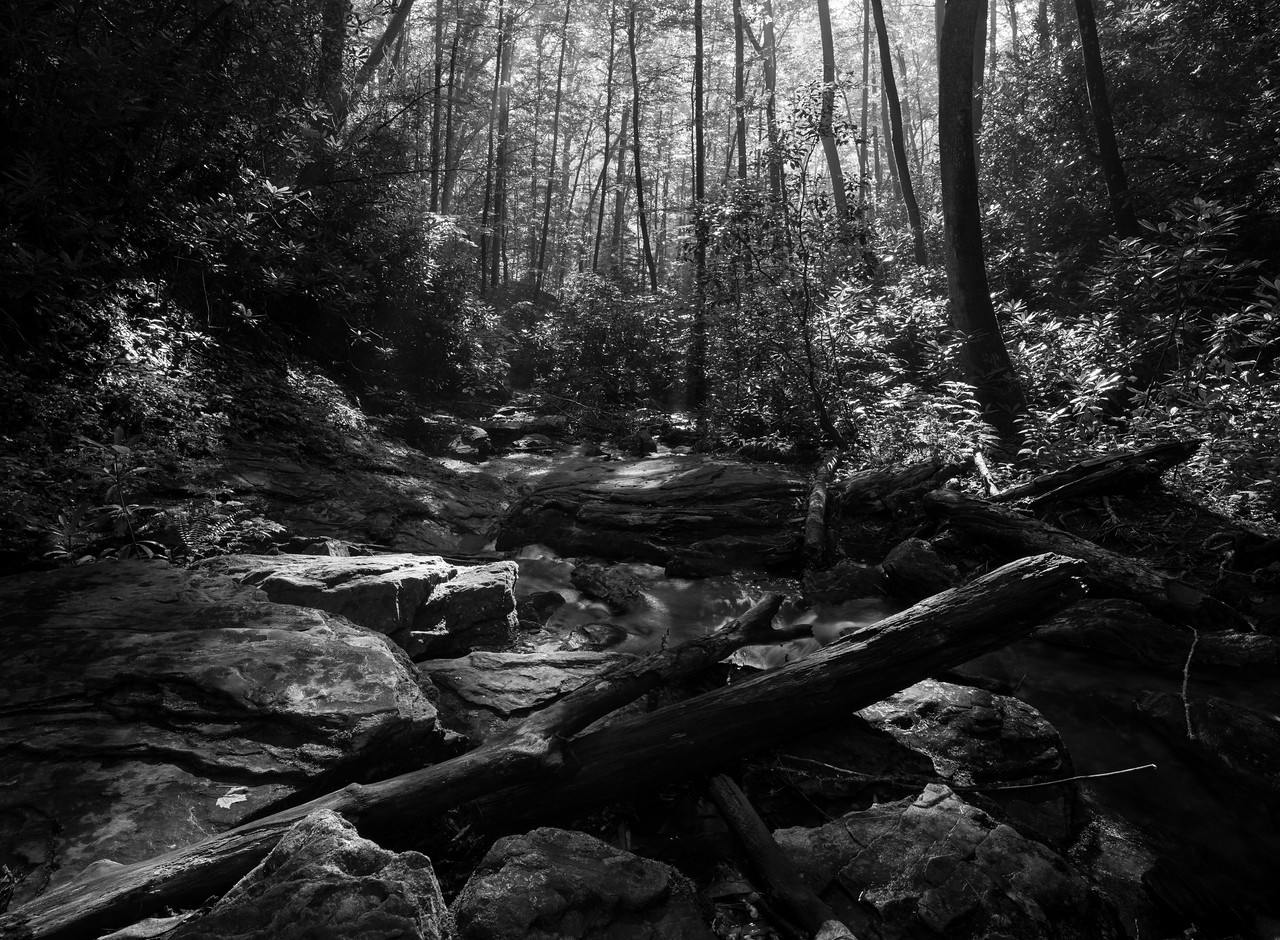 IMAGE: https://photos.smugmug.com/Nature-in-Black-and-White/i-g4x2VPV/0/3ea1af32/X2/IMG_18232-170722-X2.jpg