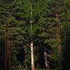 Near lake Teletskoe, Altai Republic, Russia
