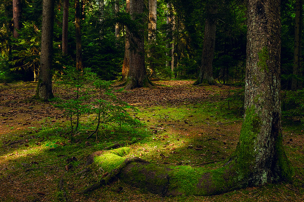 Forest near Borjomi