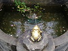 NV10 MP Samsung<br /> Frog Prince Fountain