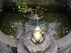 NV10 MP Samsung<br /> Frog Prince Fountain