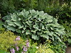 NV10 MP Samsung<br /> Hosta