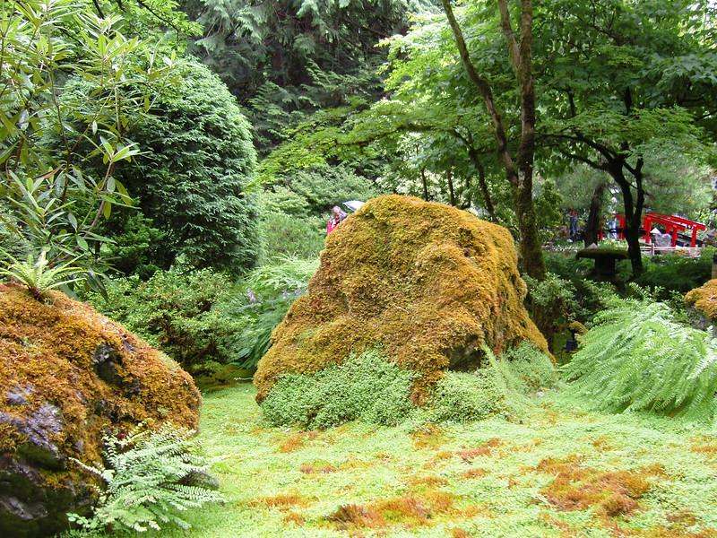 NV10 MP Samsung<br /> Ferns and moss