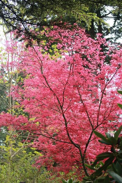 Nature in its many splendors