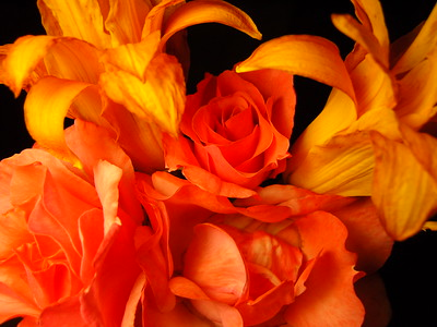 Tangerine Symphony or the gorgeous Life and Death of Daylillies
