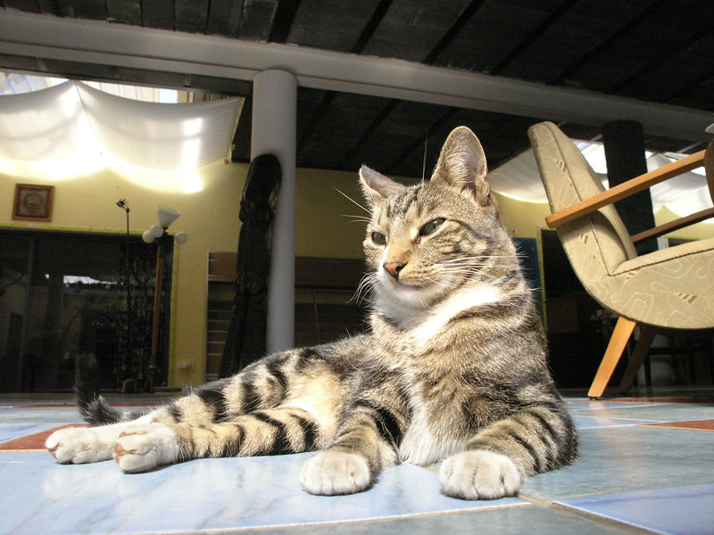 """Lucky"" the real lucky one . Rescued by my partners daughter hurt and injured from a dog bite. He turned out to become a most amazing stylish kitten and cat. Lucky is a ""poser"" I can put him and pose him nearly in any situation. He lives now on with ""Banji"" at a friend home. A true cat lover who has more than a dozen cats who run his life."