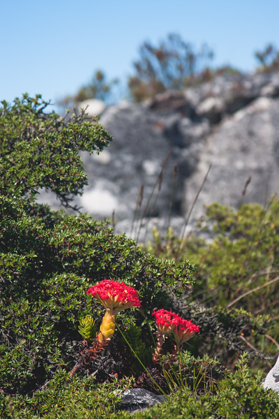 Nature from Africa Photograph 88