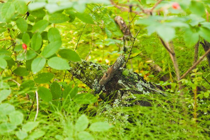 Nature from Alaska Photograph 8