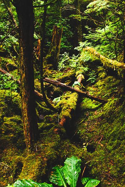 Nature from Alaska Photograph 46