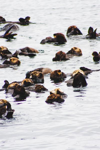 Nature from Alaska Photograph 53