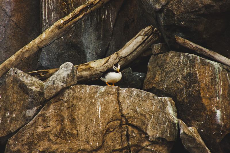 Nature from Alaska Photograph 31