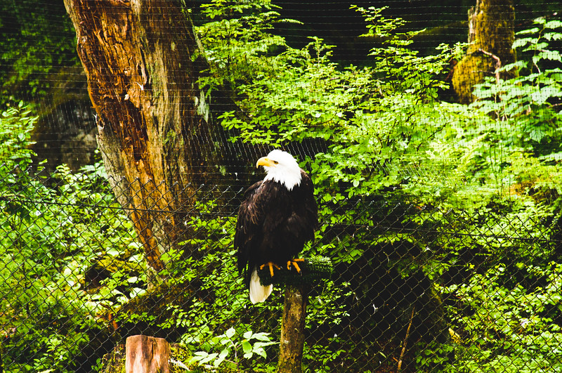 Nature from Alaska Photograph 49