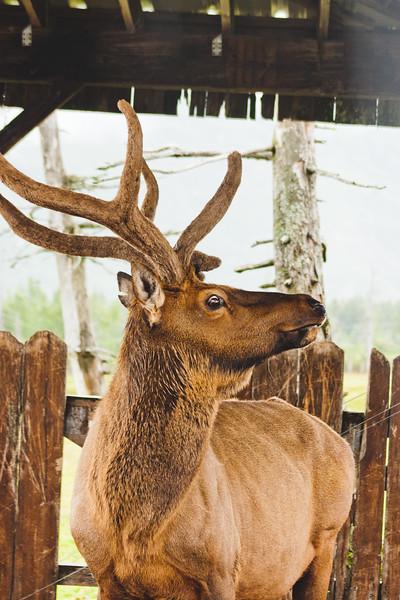 Nature from Alaska Photograph 23